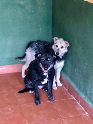 Cruce tipo terrier